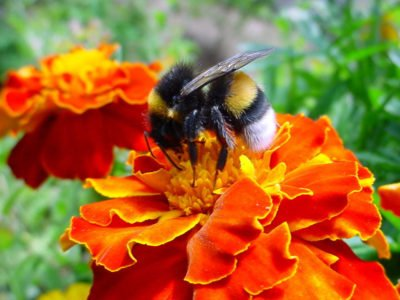 permanent ban on pesticides that are harmful to bees