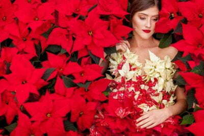 PAIRFUM Poinsettia Day Home Fragrance Flower Dress Surround