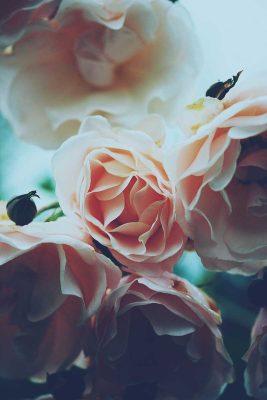Pairfum Room Fragrance Rose Perfumed Candle Dan Cook
