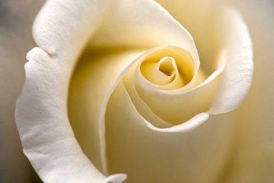 Pairfum Room Fragrance Rose Perfumed Candle Paul Morris
