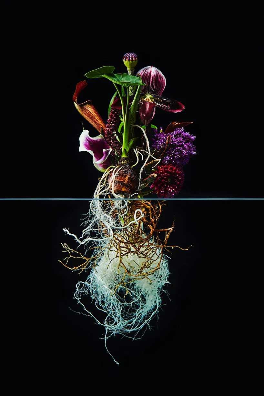 Pairfum London Azuma Makoto Undersurface Flower Root Fragrance 06
