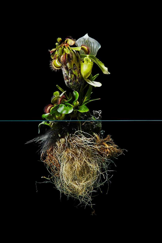 Pairfum London Azuma Makoto Undersurface Flower Root Fragrance 08