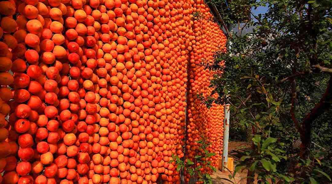 Persimmon Drying Season Japan Christo New York Fragrance