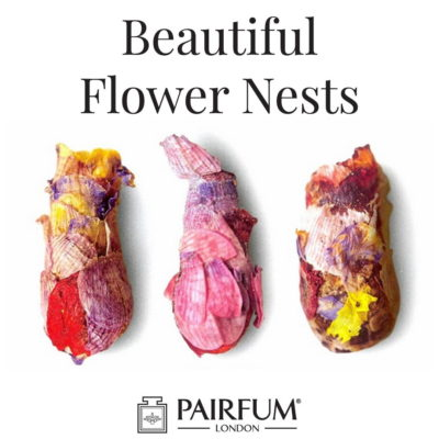 Beautiful Flower Nests Petal Special Bee Larvae Pairfum 19