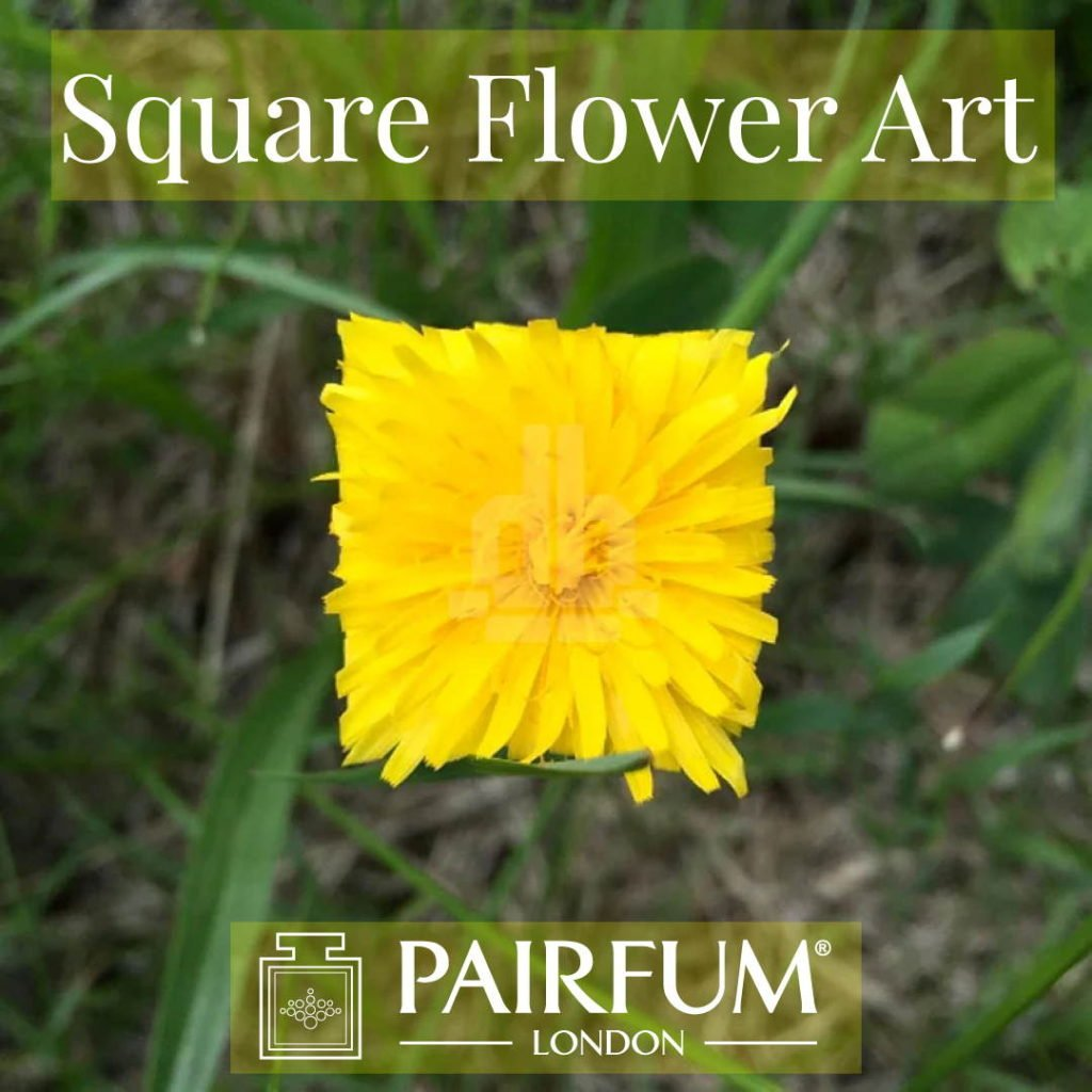 Square Flower Art Yellow Organic Form