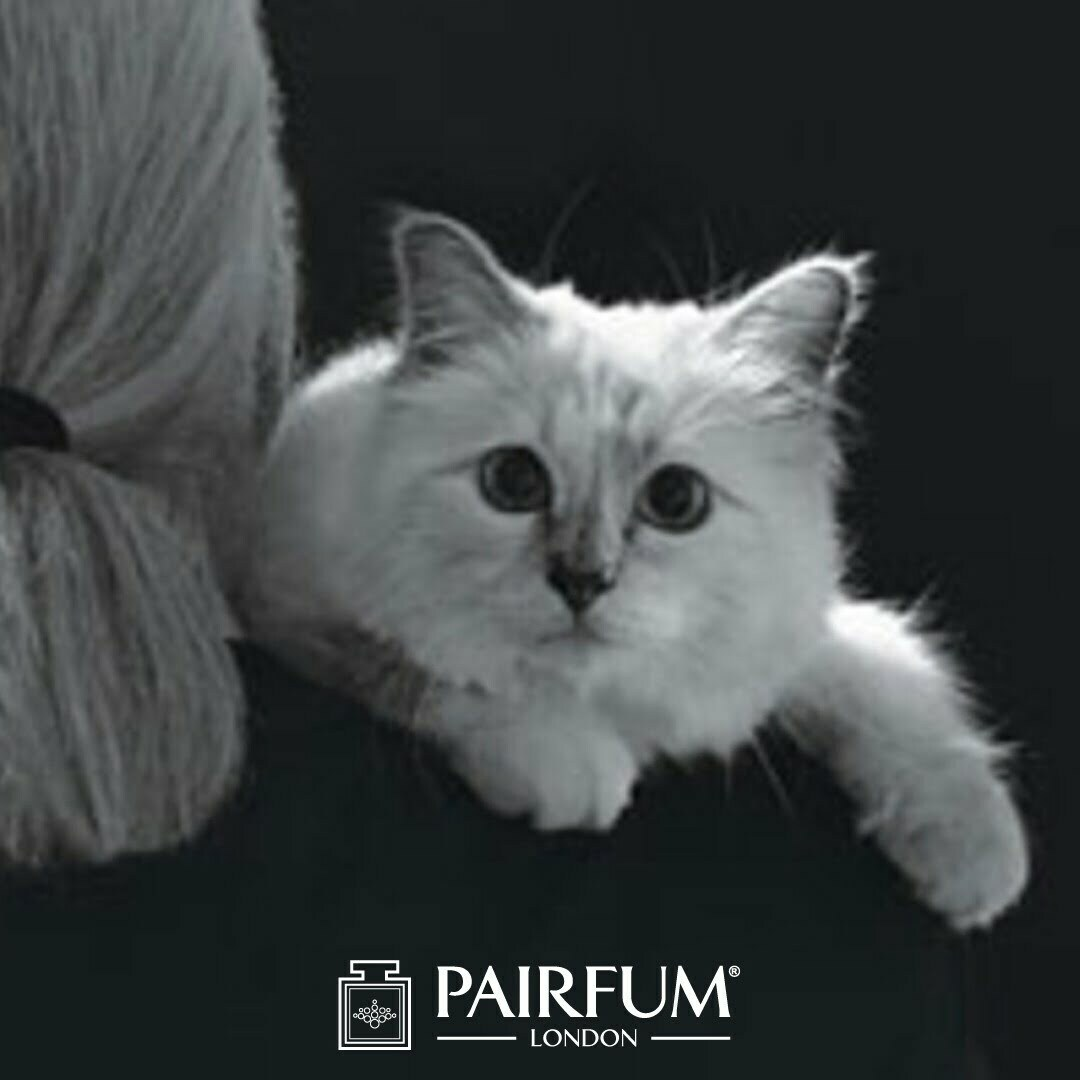Pairfum Karl Lagerfeld Fashion Fragrance Cat Choupette