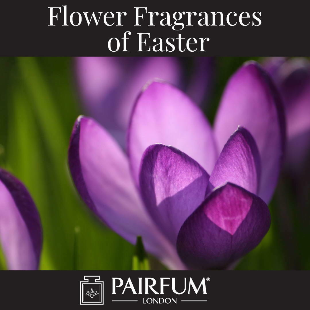 Flower Fragrances Of Easter Crocus