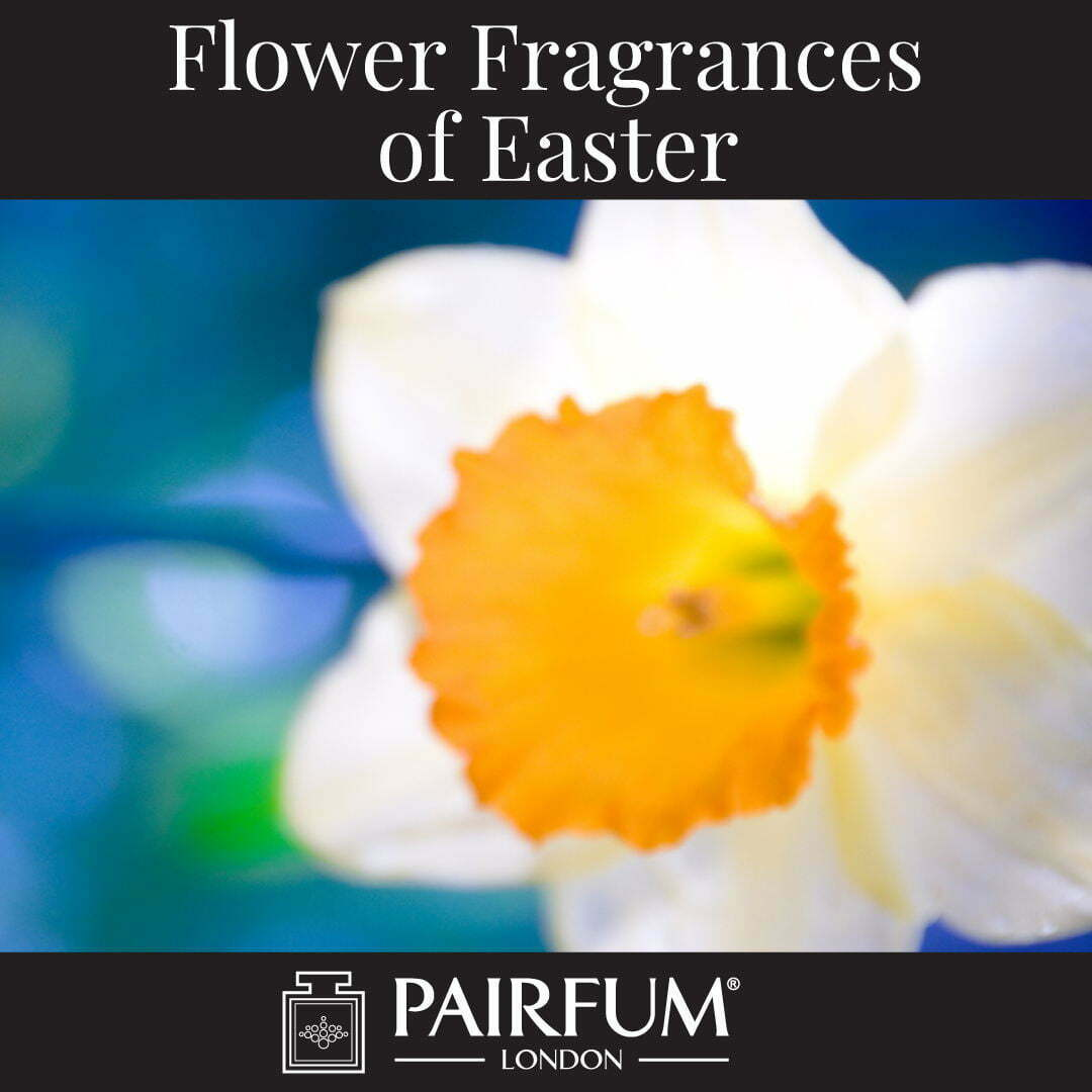 Flower Fragrances Of Easter Daffodil Narcissus