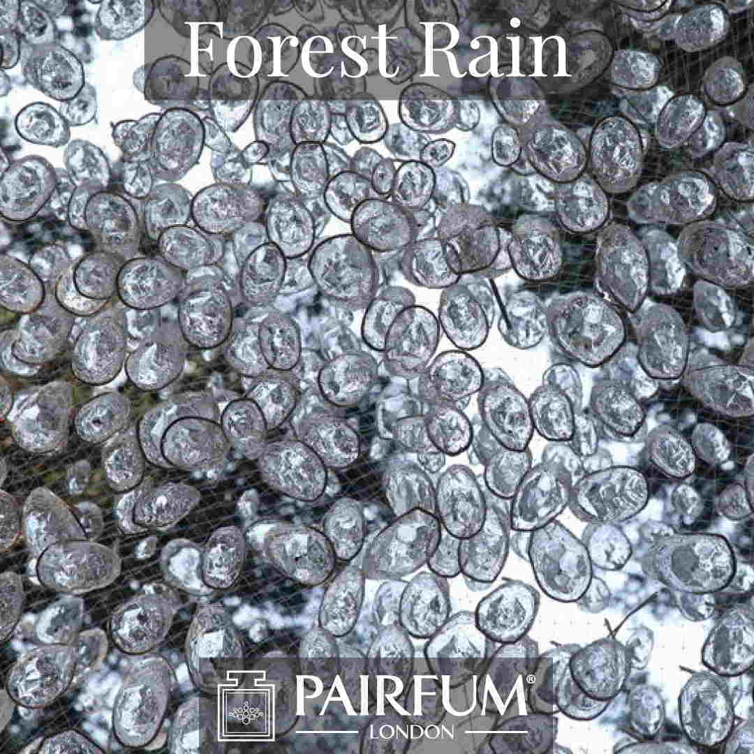 Fragrance Forest Rain Water Pine Tree Wood Ozone