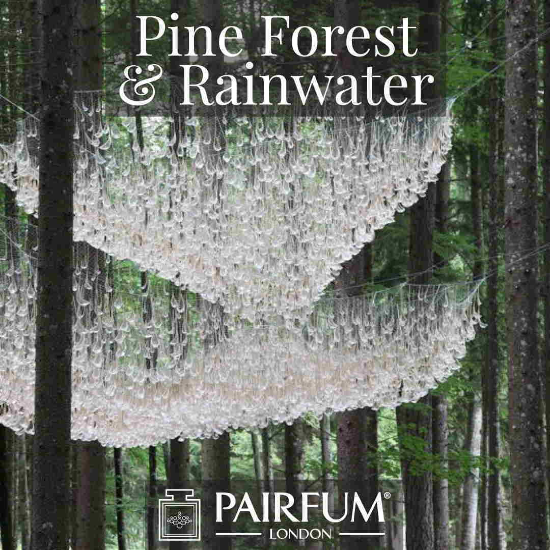 Fragrance Rainwater Pine Tree Forest Wood Ozone