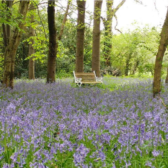 Kates Garden Bluebell Forest Bench