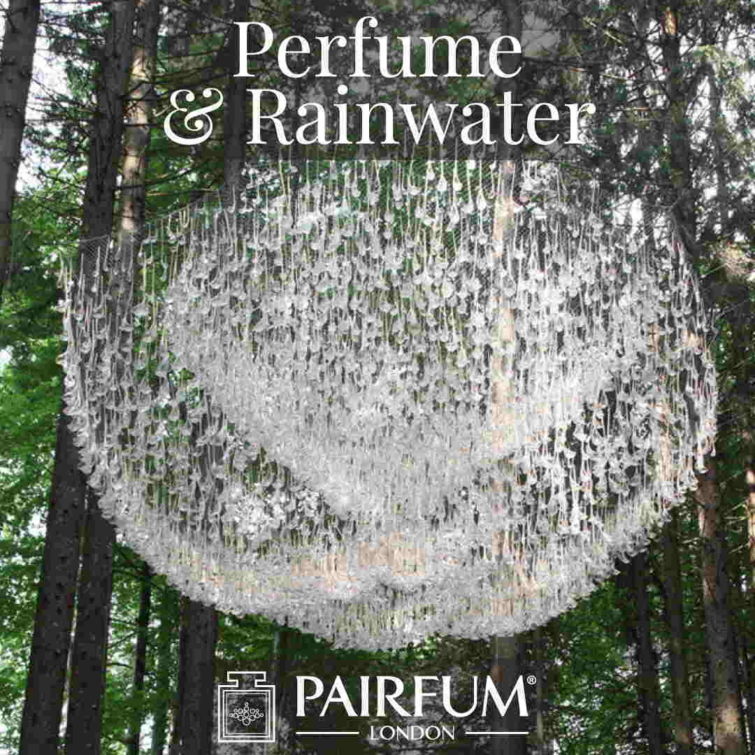 Perfume Rain Water Pine Tree Forest Wood Ozone