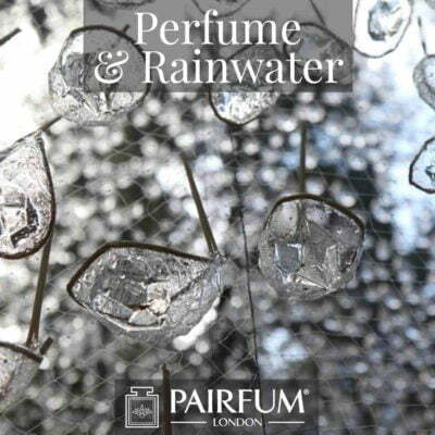 Perfume Rainwater Pine Tree Forest Wood Ozone