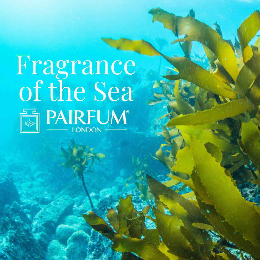 Water Scent Sex On The Beach Seaweed Algae