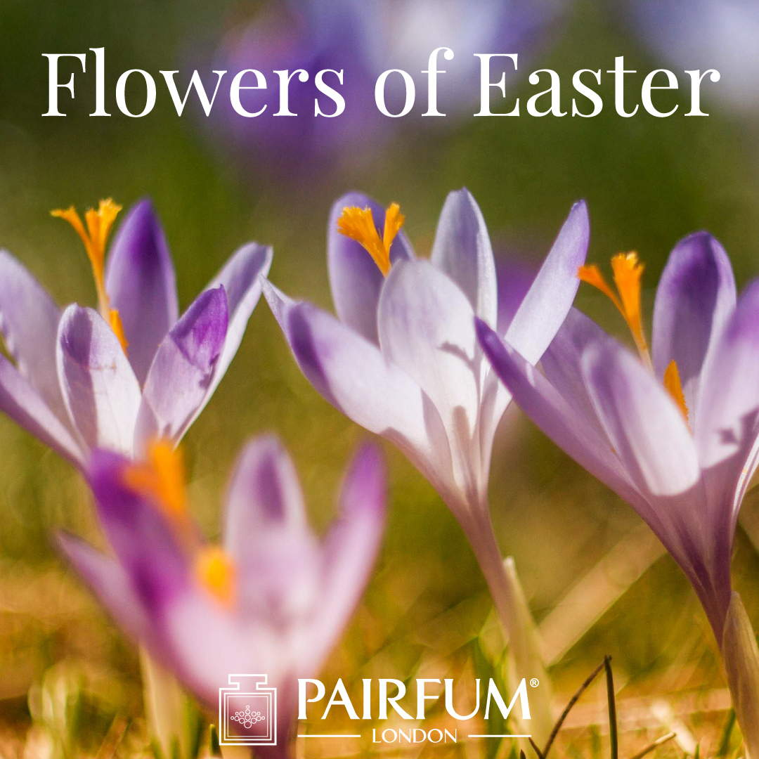 Pairfum London Fragrance Flower Of Easter Crocus