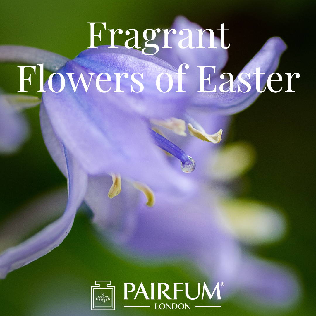 Pairfum London Fragrant Flowers Of Easter Bluebell Woodland