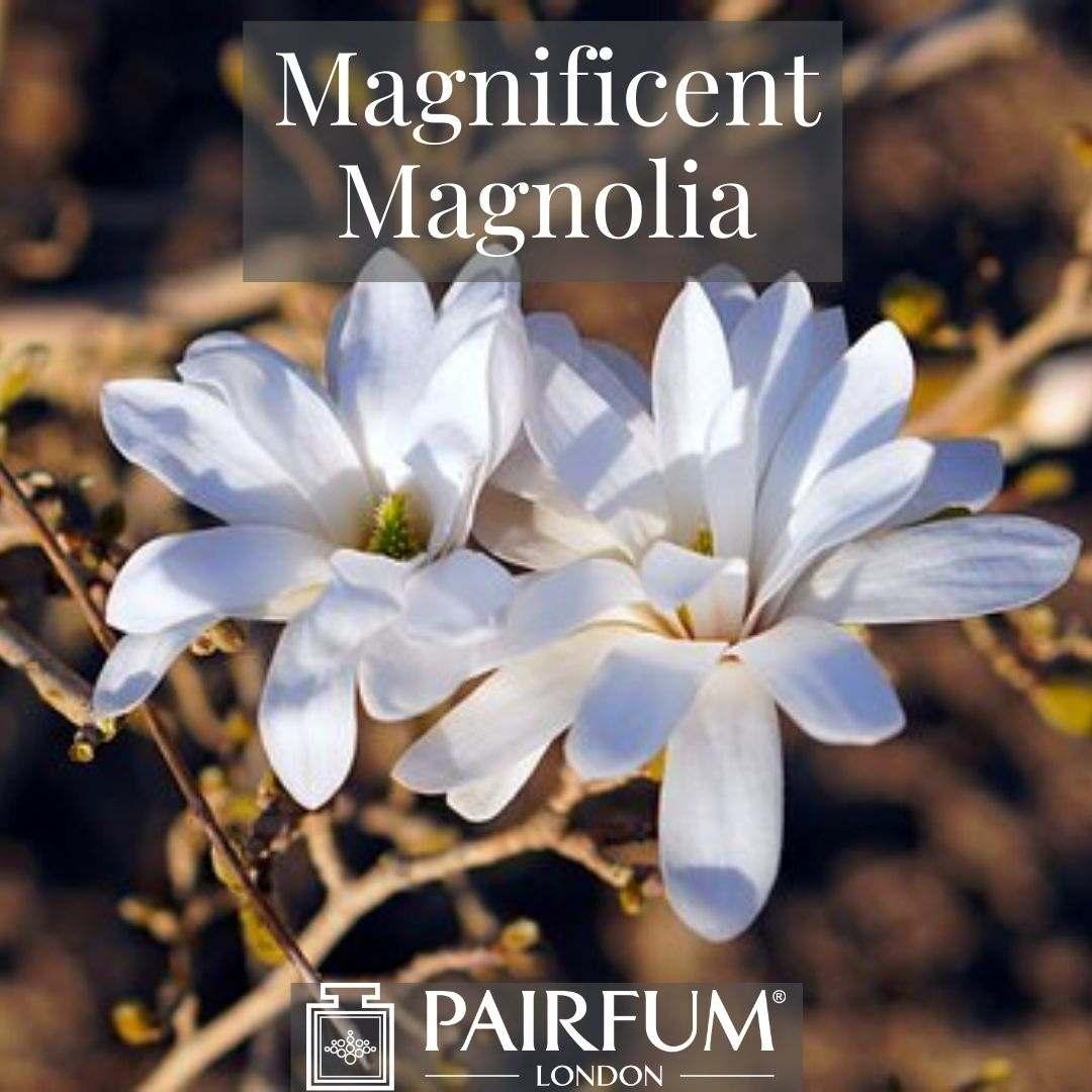 INSTAGRAM MAGNIFICENT MAGNOLIA