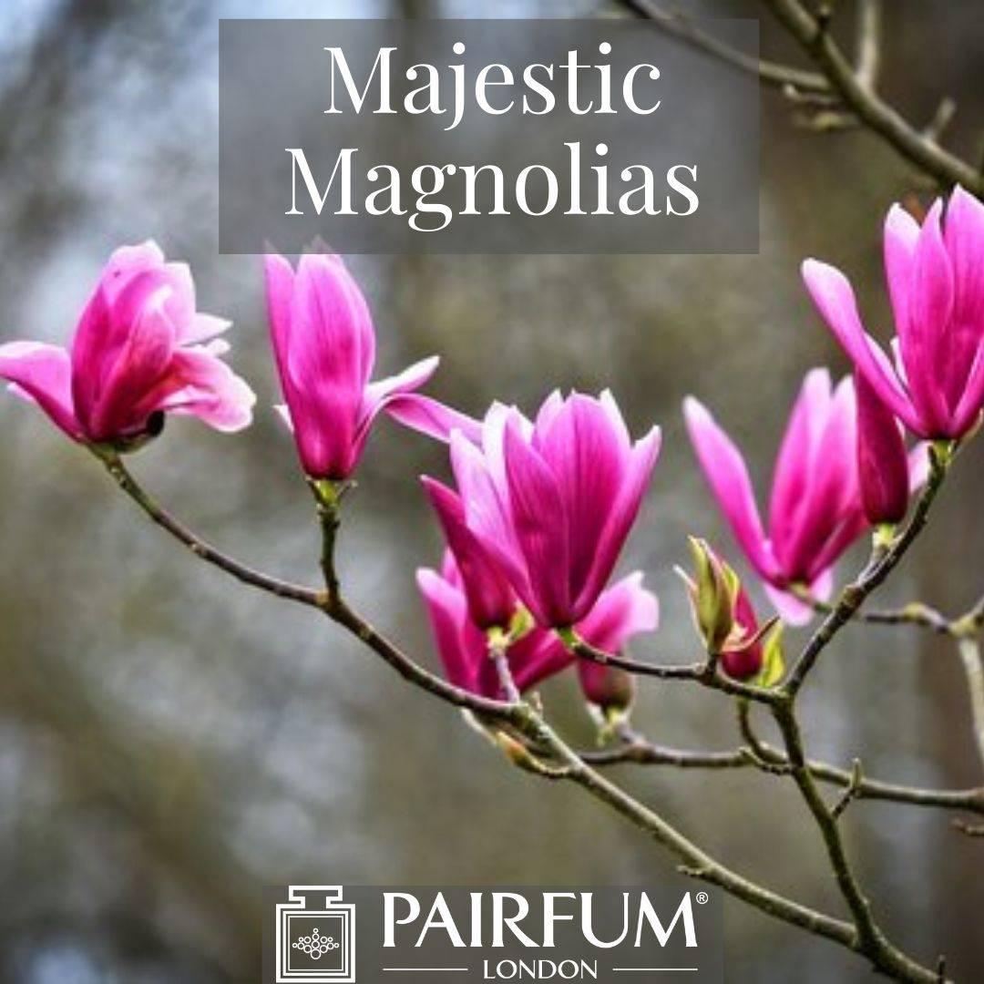 INSTAGRAM MAJESTIC MAGNOLIAS