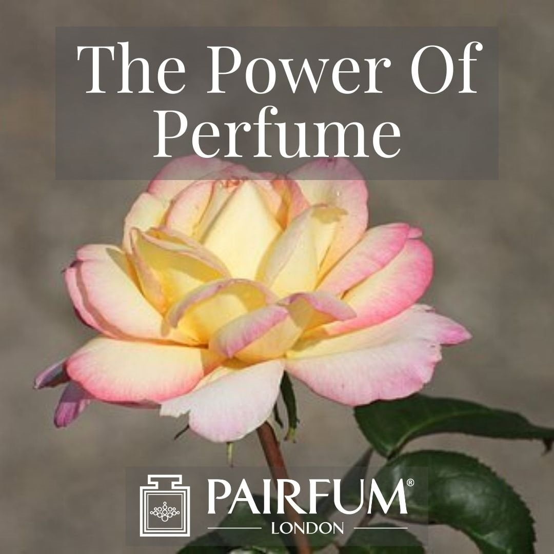 PERFUME TREND SINGLE PINK AND WHITE FLOWER