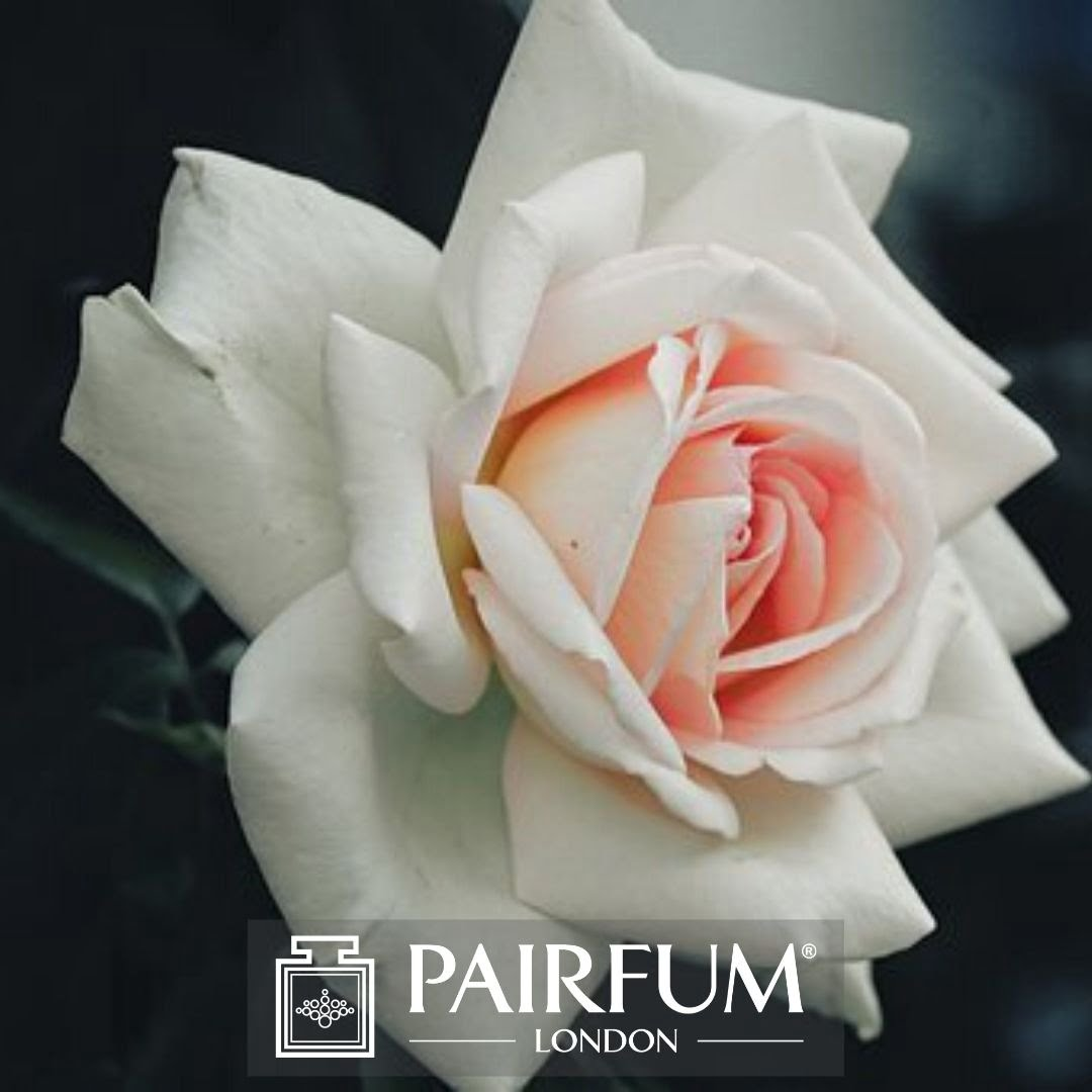 PERFUME TREND WHITE PINK ROSE
