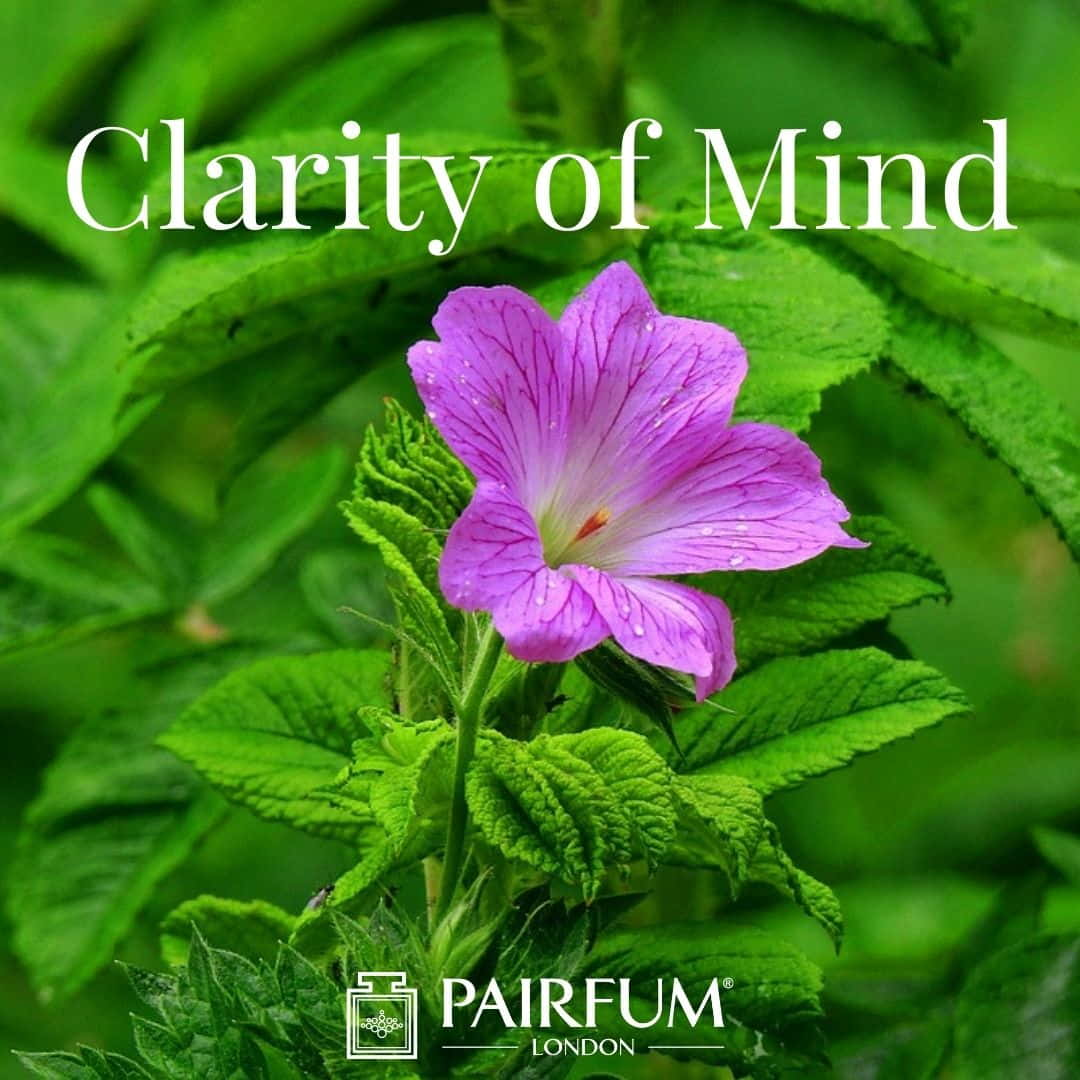 Essential Oil Diffuser Clarity Of Mind