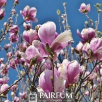 PINK MAGNOLIA AND THE SKY
