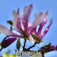 PINK MAGNOLIA FLOWER AGAINST THE SKY