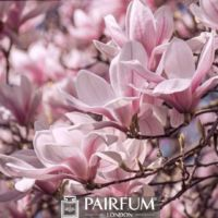 PINK MAGNOLIAS ON A PLANT