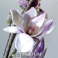 WHITE MAGNOLIA FLOWER ON A BRANCH