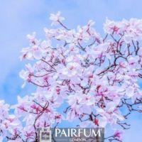 WHITE MAGNOLIA FLOWER TREE