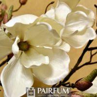 WHITE MAGNOLIA FLOWERS AGAINST CREAM BACKGROUND